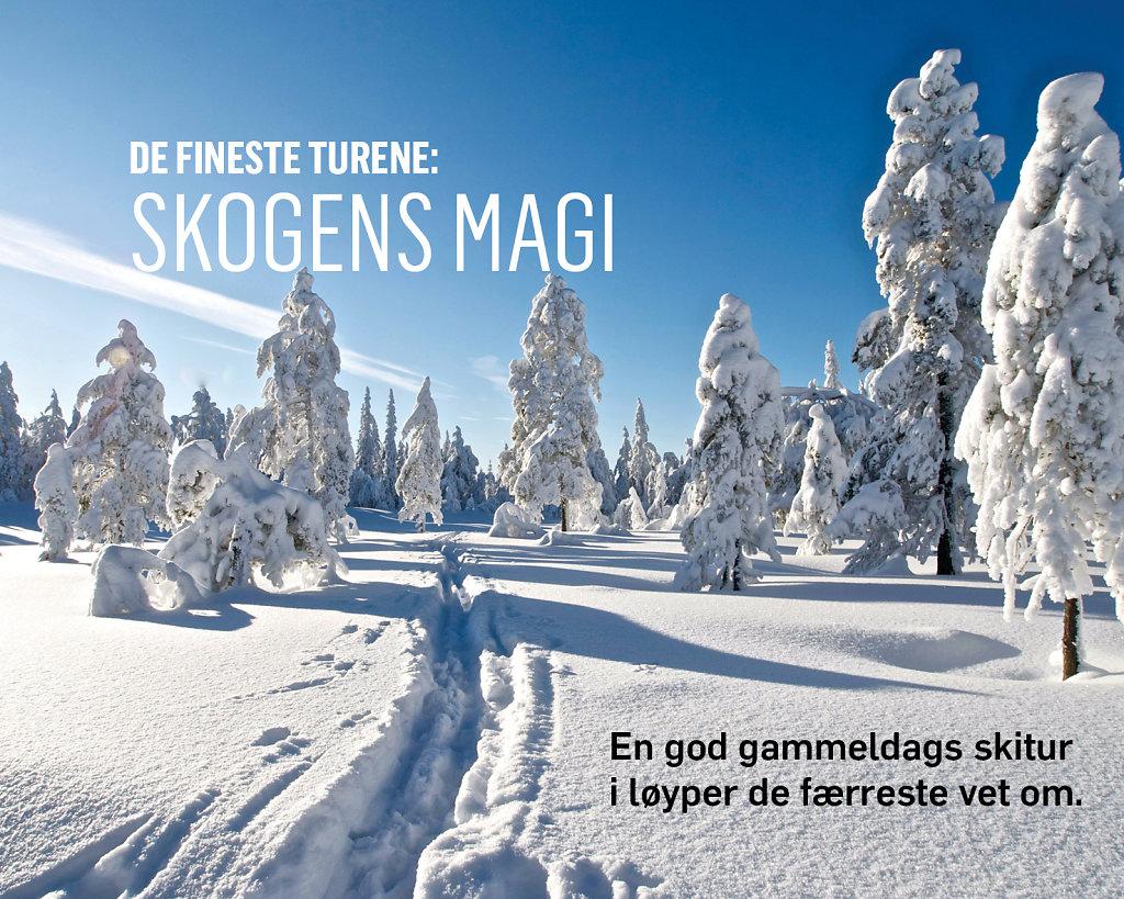 Skitur-skogens-magi.jpg